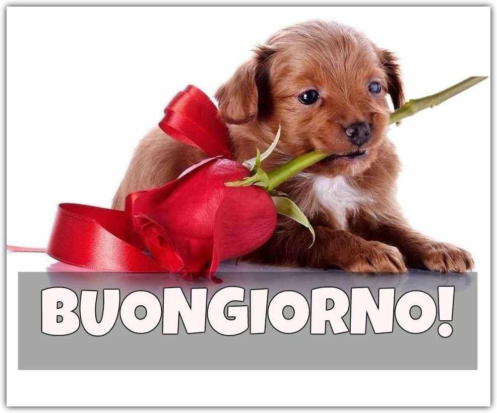 frasi buongiorno whatsapp gratis
