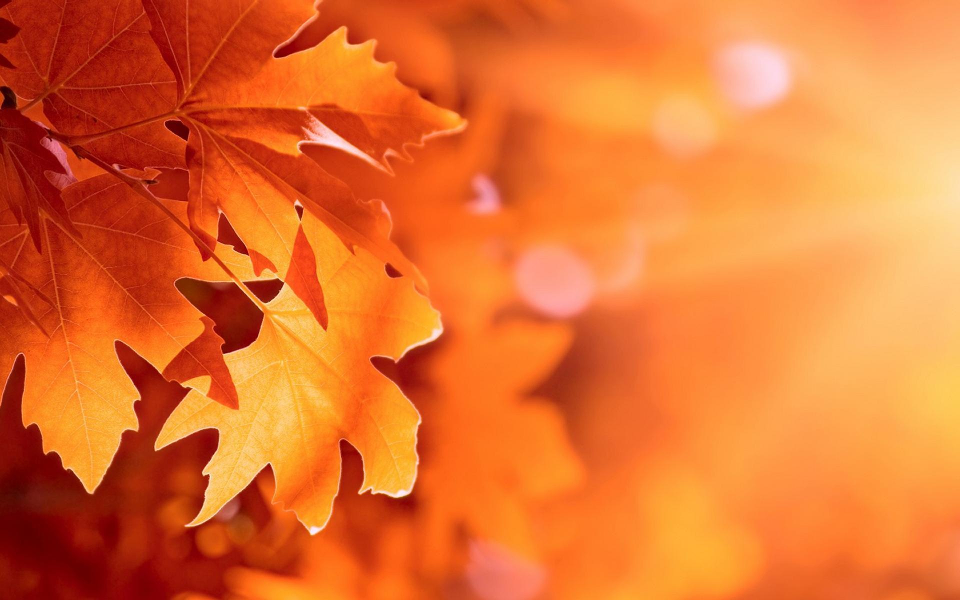 Benvenuto autunno in immagini per whatsapp 40 stati for Immagini autunno hd