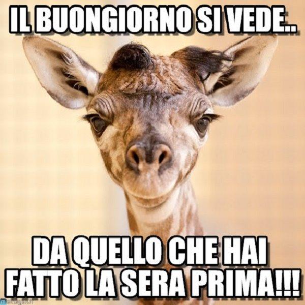 Immagini buongiorno belle per whatsapp for Immagini divertenti buongiorno venerdi