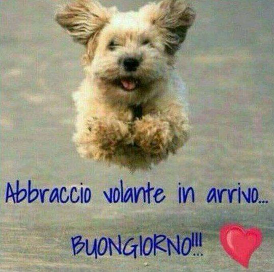 Immagini buongiorno belle per whatsapp for Immagini divertenti con frasi gratis