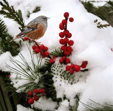 Inverno Immagini E Frasi Benvenuto Inverno